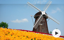 荷兰离境行前准备